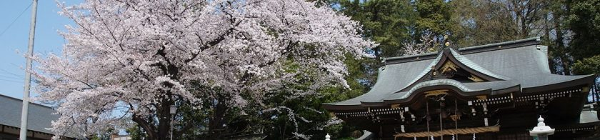 馬絹神社と桜